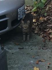 盯~ (未來風景) Tags: 喵 猫 貓 meow neko ねこ cat 고양이