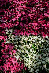 A wall of different coloured leaves (Moxibustion) Tags: birds botanicalgardens flowers sydneybotanicalgardens wildlife sydney newsouthwales australia au