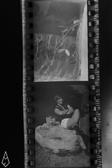 12 (andrea.fogliacco) Tags: giallo film pellicola ilford fp4 plus sviluppo rullini vintage black white develop developed reflex old school vecchia scuola