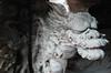 Supporting dragon (DameBoudicca) Tags: tokyo tokio 東京 japan nippon nihon 日本 japón japon giappone shibamata 柴又 shibamatataishakuten taishakuten 柴又帝釈天 帝釈天 wood trä holz madera bois legno 木材 dragon drake drache dragón drago 竜 りゅう scultura sculpture escultura skulptur 彫刻 statue staty statua estatua 塑像