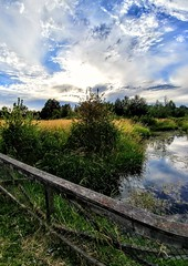 #LGG6 Scorching. (thnewblack) Tags: lgg6 lg g6 android smartphone cameraphone outdoors nature walk summer beautiful britishcolumbia 13mp hdr wideangle
