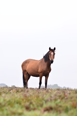 (Leela Channer) Tags: pony horse equine animal nature england newforest moor