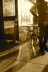 Scrawny Dog At Sunset (Art By Pem Photography: Tao Of The Wandering Eye) Tags: canon canoneosrebelsl1 eos sl1 canonefs24mmf28stm fineartphotography sunset light shadow shadows dog man windows reflection reflections storefront street streets streetphotography pavement sepia usa city citylife urban door pets