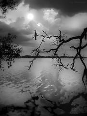 Alone (JDS Fine Art Photography) Tags: alone landscape bird tree ocean water sunset light monochrome bw atmosphere beauty naturesbeauty naturalbeauty inspirational