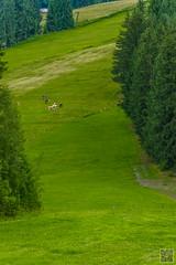 2017-07-19_09-38-59 (der.dave) Tags: 2017 flachau juli salzburg sommer vormittag wolkig bewölkt vormittags österreich