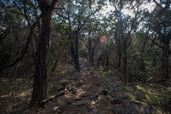 Tral - Government Canyon State Recreation Area - Bexar County - Texas - 12 February 2017 (goatlockerguns) Tags: live oak government canyon state recreation area bexar county texas usa unitedstatesofamerica south southern southwest nature natural woods trail starburst forest