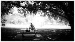 Brisbane street photography - Chillin (Jaka Pirš Hanžič) Tags: brisbane street photography queensland qld australia tree people person black white bw monochrome blackandwhite noiretblanc dark bright bench park sitting