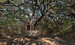 Me - Government Canyon State Recreation Area - Bexar County - Texas - 12 February 2017 (goatlockerguns) Tags: live oak government canyon state recreation area bexar county texas usa unitedstatesofamerica south southern southwest nature natural woods trail starburst forest
