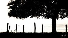 Le Léomont (chicos54) Tags: vitrimont lorraine 1er guerre mondiale bataille france noir blanc contre jour silhouette