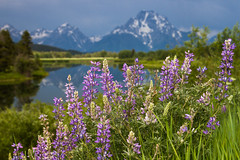 Another incredible morning in the Tetons. (jacksonholemountainresort) Tags: grandtetonnationalpark scenic summer