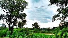 😍😍😍😍After A Rainfall #Clouds #Sky #Blue #Trees #Plants #Ride ##BikeRide #Green #HDR #Contrast #SkyHigh #Water #Rain #Rainyweather #MotoCam #MotoG3 #Vibes #Flicker #MyShot #Cool #Grass #Faves #Like #Comments #Fol (rockani451) Tags: trees skyhigh green wheat motog3 water clouds comments ride like grass vibes myshot follow field flicker cool rainyweather hdr bikeride plants faves blue rain followme motocam contrast sky