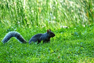 Grass One Animal Animal Themes Nature Animals In The Wild Mammal Animal Wildlife Outdoors No People Day Close-up Squirrel at Parc Ahuntsic