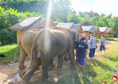BMP-Elephant-Farm-Chiang-Mai-3