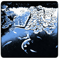 ( Meanwhile in the pond, the fishes were rejoicing ) (Dom Guillochon) Tags: outdoor nature digitalpainting water aquatic plants waterlilies fishes impression expression existence reality dreams fantasy roam wandering earth summer multiverse