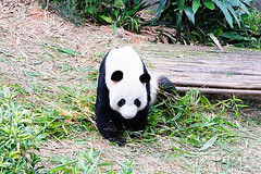 17 (樂活的大方) Tags: 20170724sb 新加坡動物園 river safari