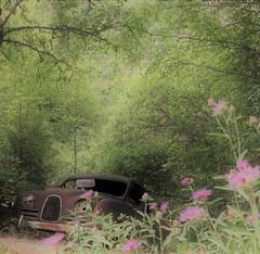(Jonas.W.) Tags: forgotten abandoned cargraveyard car vehicle sweden summer samsung nx300 bilskrot