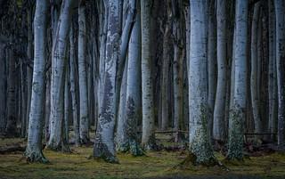 Blick in den dunklen Wald