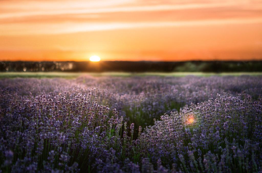 the world 39 s best photos of lavenda flickr hive mind. Black Bedroom Furniture Sets. Home Design Ideas