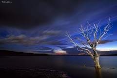 Between day and night (Peideluo) Tags: tree night nikon landscape landscapenight lightpainting longexposure clouds water sky bestcapturesaoi nikonflickraward
