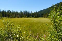 trillium lake family hike (dolanh) Tags: hiking mthoodwilderness meadow oregon trilliumlake