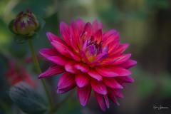 Karma (Rajesh Jyothiswaran) Tags: bokeh lenstagger macro nature spring tropical flowers foliage psychedelic beyondbokeh