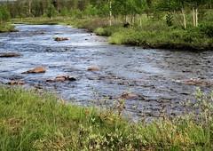 www.ilkkajukarainen.fi (www.ilkkajukarainen.fi) Tags: nature luonto travel traveling matkailu happylife museumstuff saariselkä puro river water vesi suomi100