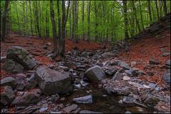 A la fageda. (antoniocamero21) Tags: paisaje rocas árboles hayas agua color foto sony natural parque montseny barcelona catalunya