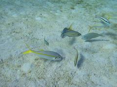 Abaco-7087489 (smithjustind) Tags: abaco bahamas diving sailing scuba snorkeling