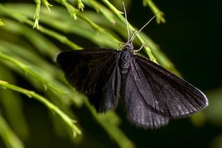 Black as Soot - _TNY_0622
