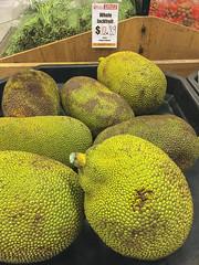 Whole Jack Fruit (cobalt123) Tags: asian leelee closeup food fruit gigantic green iphone6plus jackfruit unusual yellow largefruit bin