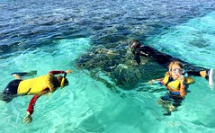 Snorkling. Lady Musgrave Island.