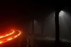 (Px4u by Team Cu29) Tags: strase auto langzeitbelichtung strasenbeleuchtung neben baum bäume fusgängerweg laub strasenbegrenzung pinguin