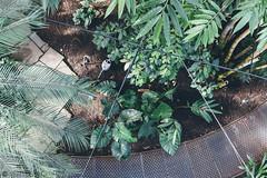 Botanic Gardens (Rebecca Suzanna) Tags: denmark travel wanderlust copenhagen city explore europe scandinavian photography street sun nyhavn superkilen park green nature colour rundetaarn botanic gardens kastellet architecture kirkegard