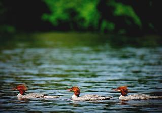 The joy of urban kayaking