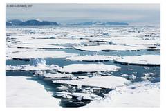Blobs of ice (Mirko Daniele Comparetti) Tags: norvegia norway svalbard acqua arctic artico blu blue cielo expedition geotagged ghiaccio ice iceberg ocean oceano sky spedizione spedizionearticasvalbard2017 water web