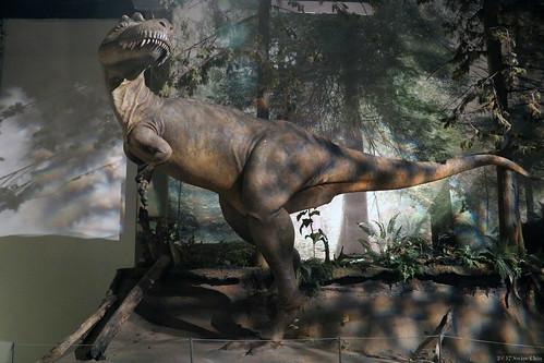 Museum of dinosaurs