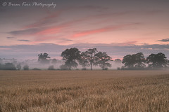 Mist At Sunset (.Brian Kerr Photography.) Tags: cumbria carlisle durdar sunset misty trees crops light sony formatthitech a7rii availablelight colour outdoor outdoorphotography nature naturallandscape natural briankerrphotography briankerrphoto field tree clouds skies sky landscapephotography photography photo photographer cumbrian