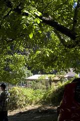 Longstock_219 (ElaineK) Tags: longstock2017 sunday pancake breakfast food outdoors picnic trees table coffee people cooking santacruzemountains
