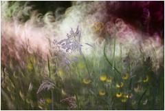 """""""Dipingere"""" con la  fotocamera (Photo Luc@) Tags: canon ff lenti vintage f28 allaperto green macro colore luce"""