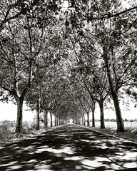 beautiful road which I discovered today belle route que j'ai découverte aujourd'hui #benheinephotography #road #street #route #photography #trees #arbres #melody #music #path #chemin (Ben Heine) Tags: benheinephotography photography composition light smartphone nature landscape beauty beautiful photo photographie art ifttt instagram benheine horizon benheineart