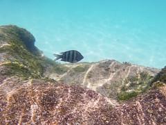 Stripes (Jerry Bowley) Tags: rivieramaya xelha ecopark fish snorkeling allinclusive