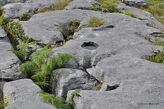 Grikes and Bracken. (mcgrath.dominic) Tags: glints grikes bracken wildflowers theburren coclare