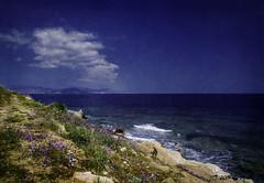 Mykonos Beach (longliz1888) Tags: mykonos beach flowers rocks sea waves clouds blue textures pink purple green greece