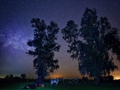 The night (karinavera) Tags: travel view animals argentina buenosaires horses pampa campo field trees free sonya7r2 milkyway longexposure