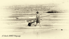 La récolte (Charles_RAMOS-iVision18000) Tags: salt monochrome photography photographer worker woman hat summer salines reflects reflection culture tradition cultural europe britany travel landscape scenic seshore shoreline 300mm 5530 nikkor dslr slr didital nikon scene