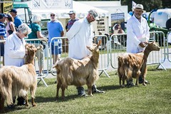 Kent Show Friday_173
