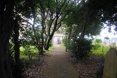 Through the trees to St Uny's Church (zawtowers) Tags: cornwall kernow summer holiday break vacation july 2017 carbisbay porth reb tor lelant lannanta south west coast path walk late afternoon rainy wednesday 19th st unys church walking through trees romantic view
