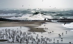 sea life (photoksenia) Tags: ilce7m2 waves bird ukraine odessa sea seagull winter wind storm blacksea landscape sony