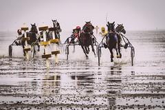 Duhner Wattrennen (TS_1000) Tags: olympus pferd pferderennen wettrennen duhnen duhnerwattrennen nordsee cuxhaven