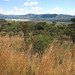 The Miombo woodlands